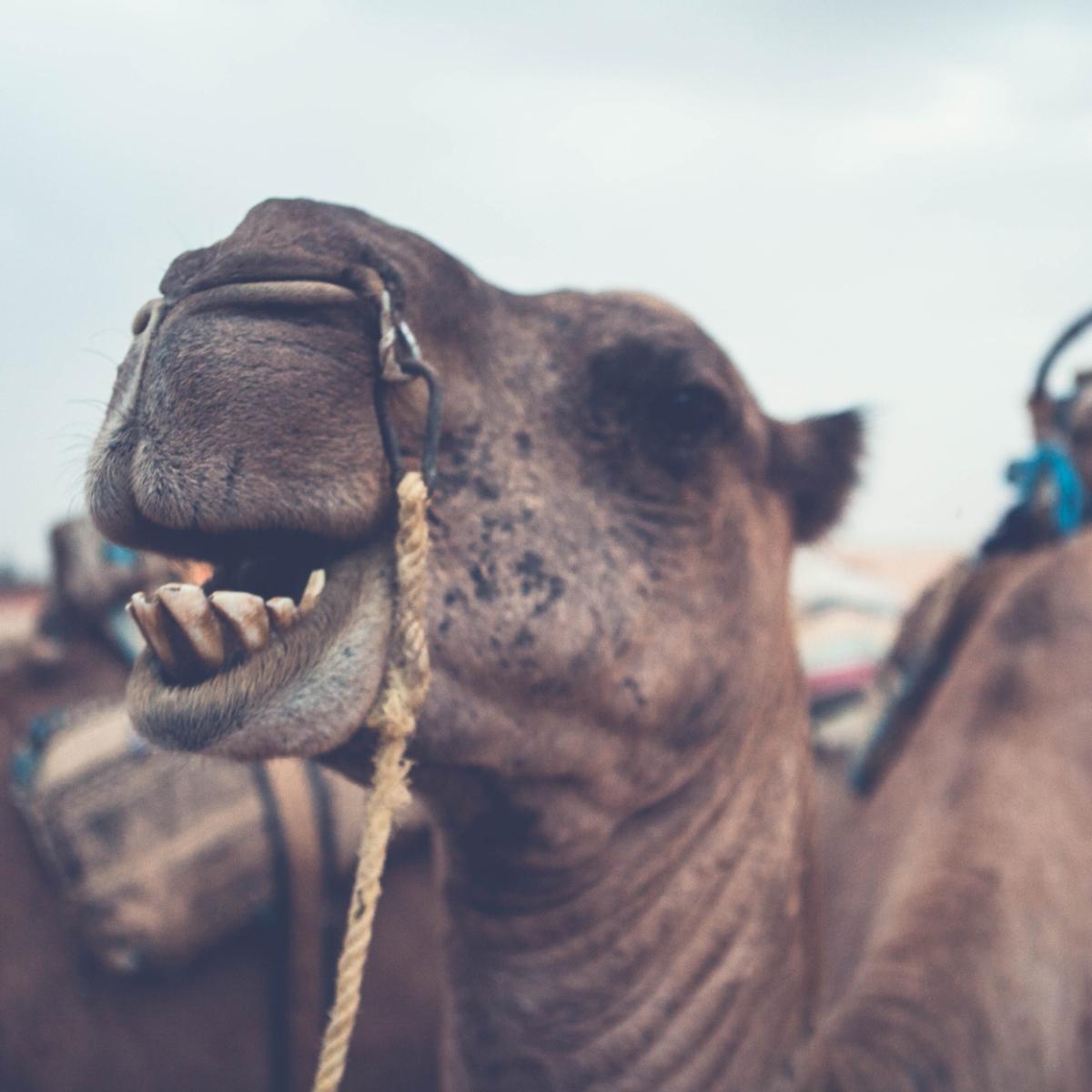 tunisia::: travel